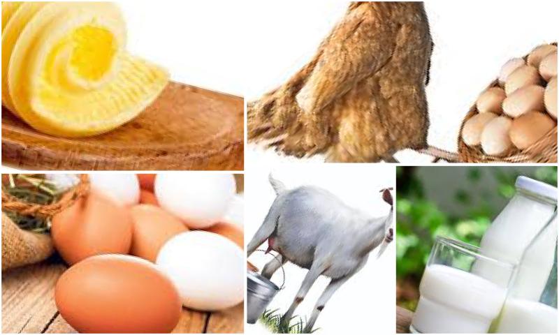 Doğru Organik Yumurta Seçimi