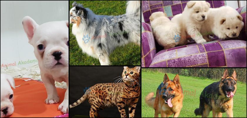Evcil Hayvan Mama Etiketi Nasıl Okunur?