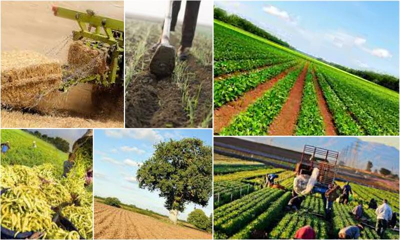 Mevsim Geçişlerinin Üretime Etkisi Nedir?