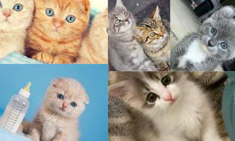 Kedi Sahiplenmek İçin Ne Yapmalıyım?